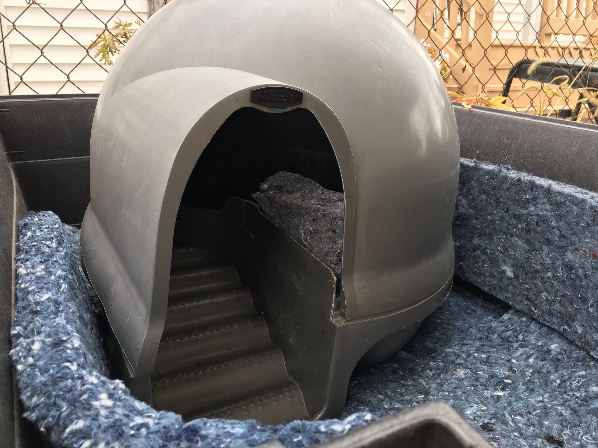 close up cat shelter